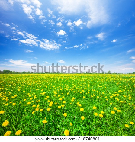 Green field with flowers under blue cloudy sky #618740801