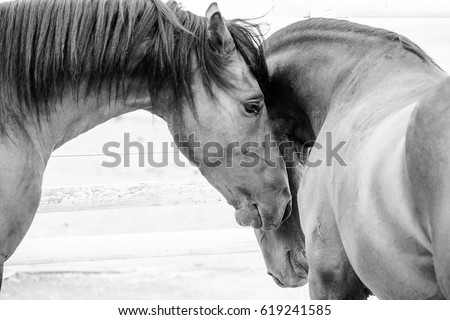 Close up of a thorough bred horse in a pen #619241585