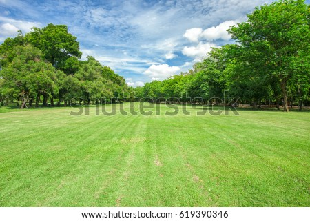 Green grass field in park at city center  #619390346