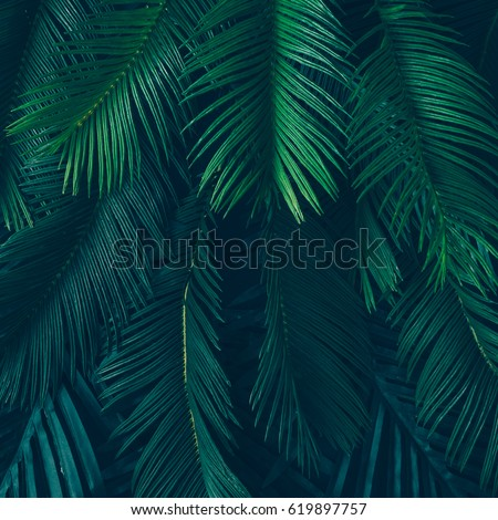 Creative nature layout made of tropical leaves and flowers. Flat lay. Summer concept. #619897757