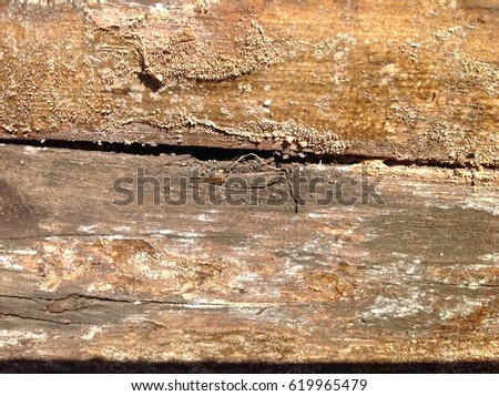Wood texture #619965479