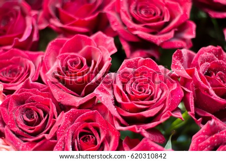 Photo of a bouquet of roses. A prickly bush or shrub that typically bears red, pink, yellow, or white fragrant flowers, native to north temperate regions.  #620310842