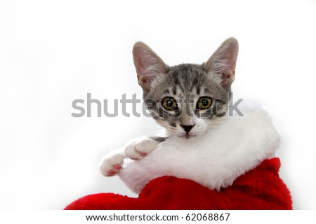 Cat in a red and white Christmas stocking #62068867