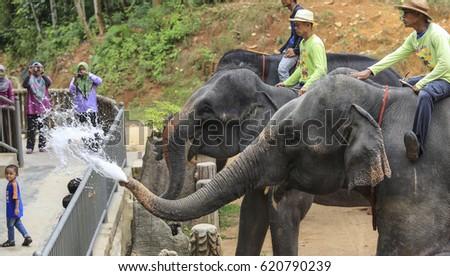 TERENGGANU, MALAYSIA - AUGUST 27, 2016 : Mahout with Asian Elephant at Kenyir Elephant Conservation Village, Terengganu. #620790239