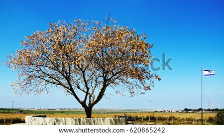 Marvelous Tree And The Israeli Flag At The Old Kibbutz Be'erot Yitzhak In Israel (Near Kibbutz Nahal Oz) Against The Background The Gaza Strip Royalty-Free Stock Photo #620865242