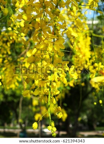 Bunch of yellow flowers #621394343