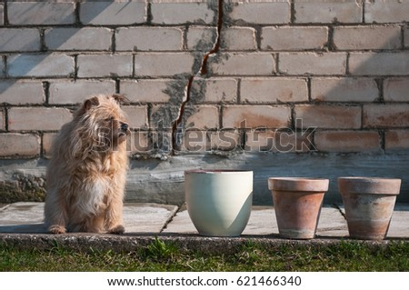 Dog and flower pots. #621466340