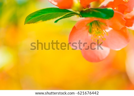 Spring flower on bright sunny blurred background. Golden evening on the summer meadow, natural landscape
