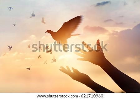 Woman praying and free bird enjoying nature on sunset background, hope concept  Royalty-Free Stock Photo #621710960