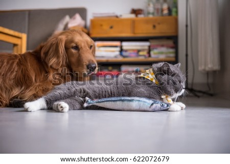 British cat and toy fish #622072679