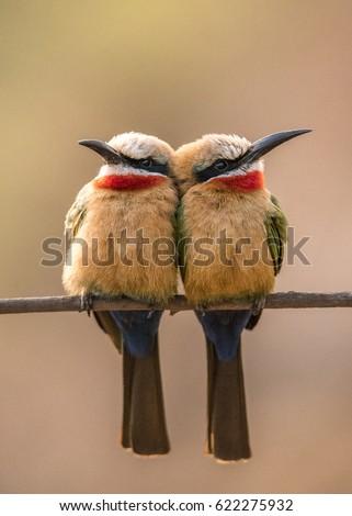 Love Birds #622275932