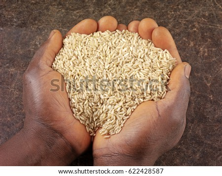 CLOSE UP OF BLACK MAN'S HANDS HOLDING WHOLEGRAIN BROWN RICE #622428587