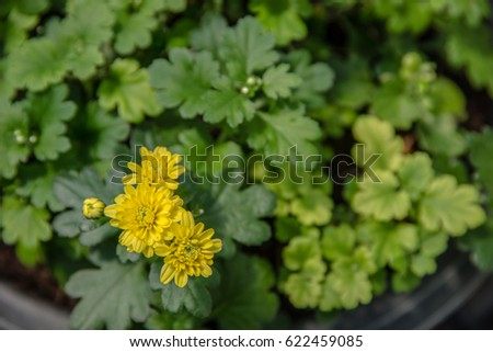 Flower garden with colorful background. #622459085
