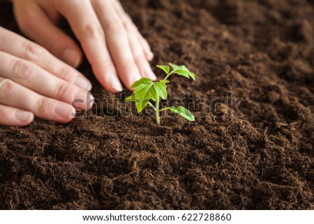 Woman waiting when the seedling will grow up. In early spring preparations for the garden season.  #622728860