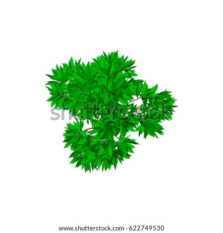 Apple tree. Isolated on white background. 3d Vector illustration. Top view. #622749530
