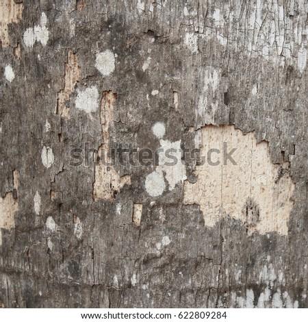 Crusted bark #622809284