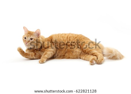 The tabby cat on the white background. #622821128