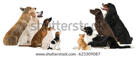 Group of breed dogs Royalty-Free Stock Photo #623309087