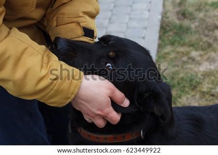 Black dog and man's hand #623449922