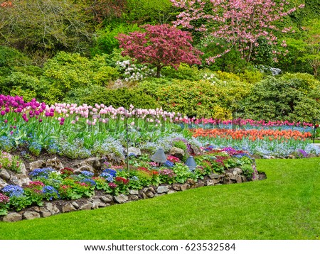 Field of colorful tulips in the spring garden #623532584