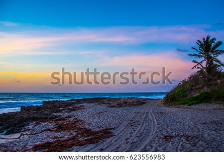 Day break on a rocky beach with dune buggy tracks in the sand and a palm tree on a dune  #623556983