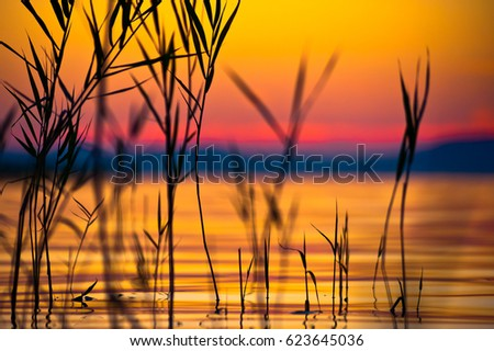 Beautiful orange sunset reflecting on the waves and black silhouettes of reeds with shallow depth of field as background image