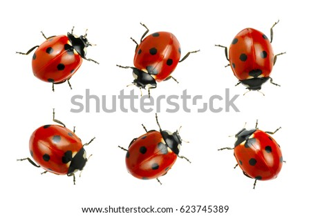 Collection of ladybugs isolated on white  Royalty-Free Stock Photo #623745389