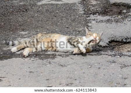 Cat on the asphalt #624113843
