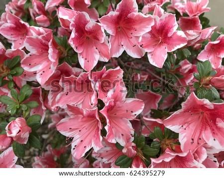 spring pink flowers #624395279
