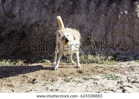Hunting dog mud bath in forest, nature #624508883