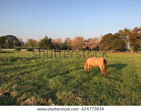 Horse on the field grass with noise and soft focus vintage tone     #624773834