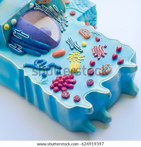 Model of animal cell in laboratory #624919397