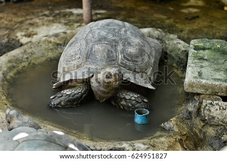 The old tortoise soak in the pond. #624951827
