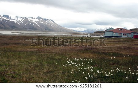 Northern arctic landscape. Mountains, ice, small colored house and valley with cotton grass. Outskirts of Longyearbyen, Spitsbergen archipelago (Svalbard island), Norway #625181261