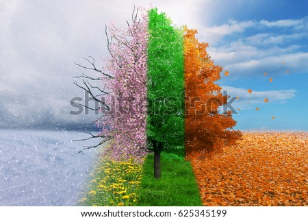 Four season tree magical, nature Royalty-Free Stock Photo #625345199
