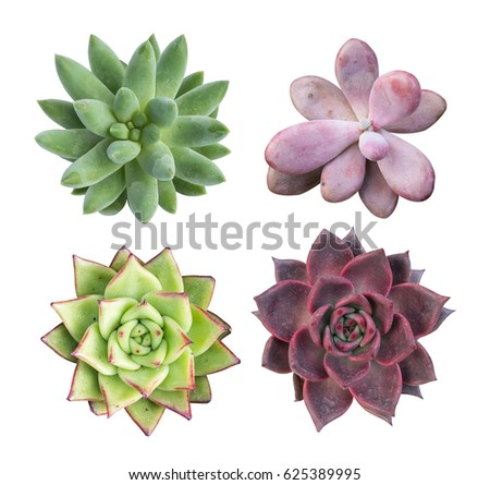 collection of succulent top isolated on white background Royalty-Free Stock Photo #625389995