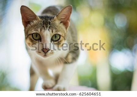 Cat thai   #625604651