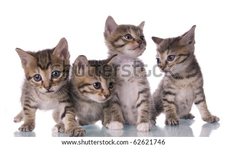 Kitty on the white isolated background #62621746