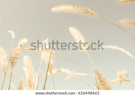 grass flowers on sky and sun