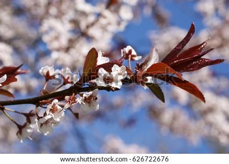 flower blossoms #626722676