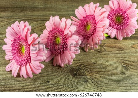 Colored gerbera flowers on a rustic wooden table as a background #626746748