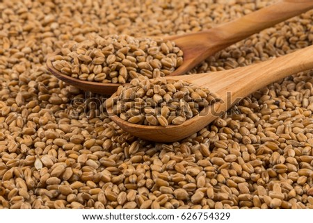 Spelt grain (dinkel wheat) on a spoon and background #626754329