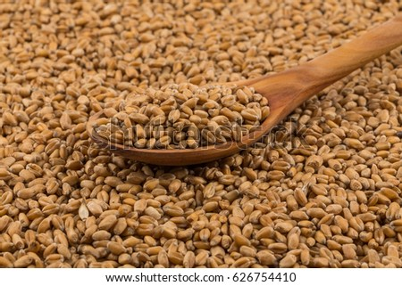 Spelt grain (dinkel wheat) on a spoon and background #626754410