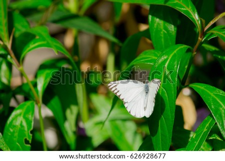 Butterfly fly to the green leaf. #626928677