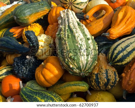 Selection of colorful pumpkins for Halloween Scary Jack background #62700937