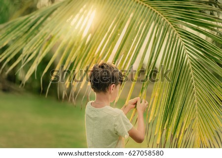 on a Sunny summer day on green grass boy and a large palm branch #627058580
