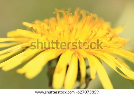 Spring Flowers #627073859