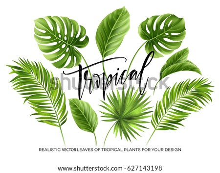 Tropical palm leaves set isolated on white background. Vector illustration EPS10 Royalty-Free Stock Photo #627143198