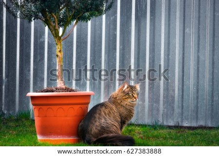 Beautiful cat sitting next to the pot on the green grass for pets #627383888