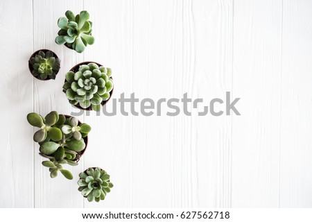 Green house plants potted, succulentson clean white wooden backg Royalty-Free Stock Photo #627562718